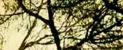 Nanook Will Showcase Primavera 2 EP at Teatro das Figuras Next Month