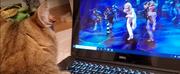 VIDEO: Feline Friends Meet the Cats of CATS Photo