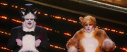 VIDEO: James Corden and Rebel Wilson Present at the Oscars While Dressed as Cats Photo