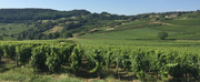 LES VINS GEORGES DUBOEUF and the Pride of Beaujolais