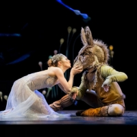 Royal New Zealand Ballet Cancels Performances and Makes Changes to Auditorium Photo