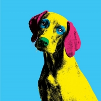 Casting Announced For DOG SHOW at The Pleasance This Christmas Photo