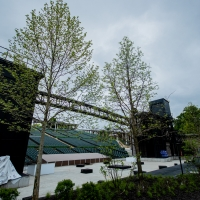 The Muny's Iconic Tree Canopy Returns Photo