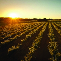 Photo Coverage: Paul Foppiano and FOPPIANO VINEYARDS in the Russian River Valley of California