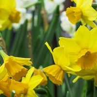 The Revels Presents SPRING SING: A Family Celebration Of The Vernal Equinox Photo