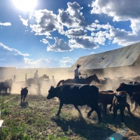 Opera Lafayette to Perform THE BLACKSMITH to Live Audience on Colorado Ranch Photo