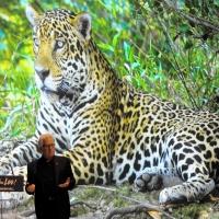 Alberta Bair Theater Kicks Off Nat Geo Speaker Series With ON THE TRAIL OF BIG CATSWith Steve Winter