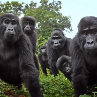 NATURE: SPY IN THE WILD 2 to Premiere on PBS Photo