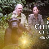 CuriosityStream Celebrates World Chimpanzee Day With July 14th Premiere of Original N Photo