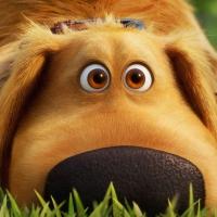 Disney+ Releases Trailer for Pixar's DUG DAYS Photo