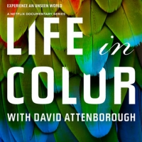 VIDEO: Watch the Trailer for LIFE IN COLOR WITH DAVID ATTENBOROUGH