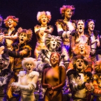 BWW Flashback: Celebrate CATS' Anniversary With a Look Back at its History