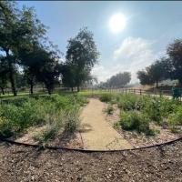 """Parks Foundation To Plant """"LA Park Forest"""" At Hollenbeck ParkAs Part Of City-Wide E Photo"""