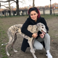 What are Broadway Performers and Their Pets Doing with Their Time?
