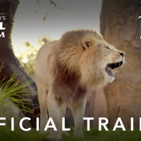 VIDEO: Watch the Official Trailer for THE MAGIC OF DISNEY'S ANIMAL KINGDOM