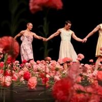 Danse Danse Cancels NELKEN By Pina Bausch Photo