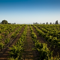 FOPPIANO VINEYARDS Celebrates 125 Years of Wine Production in the Russian River Valle Photo