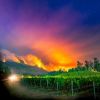 """Napa Valley Museum Announces New Virtual Exhibit REAL/TIME: ART OF THE MOMENT �"""" TES Photo"""