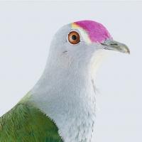 Manly Art Gallery & Museum Presents BIRDLAND Exhibition Photo