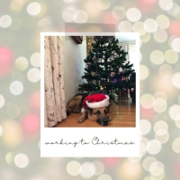BWW Blog: Working to Christmas Photo