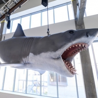 Academy Museum Installs The Only Surviving Shark Model From the 1975 Film JAWS Photo