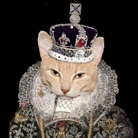 BWW Feature: AUDITIONS FOR KING OF CATS SEASON SHOWS at MNM Theatre Company/King Of C Photo