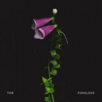 TOR Releases First Single 'Foxglove' Photo
