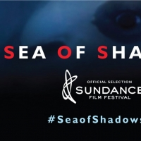 SEA OF SHADOWS Premieres on National Geographic Nov. 9