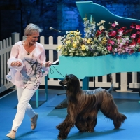 BWW Review: LET'S BE FRIENDS FUREVER at The Good Room Photo
