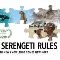 Documentary THE SERENGETI RULES to Premiere on Nature on PBS This October