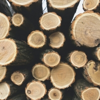 Student Blog: Why Sky-High Lumber Prices are a Big Deal Photo