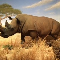 Las Vegas Natural History Museum to Celebrate 30th Anniversary on Saturday, July 10 Photo