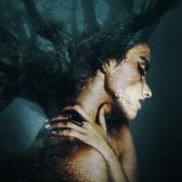 Co-Opera Presents AMONGST THE TREES Photo