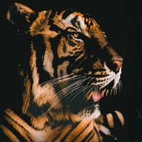 UNCAGED: The Untold Stories from the Cast of Tiger King Announced at Marcus Center Photo