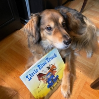 Bravo The Theatre Dog Does Digital With Virtual Story Times