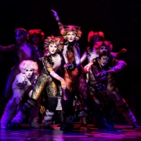 BWW Review: CATS at Majestic Theatre