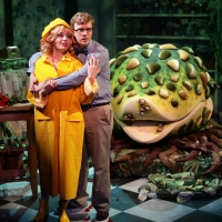 BWW Review: LITTLE SHOP OF HORRORS: This Plant's No Shrinking Violet Photo