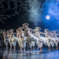 BWW Review: Matthew Bourne's SWAN LAKE a Joyful Holiday Treat Photo