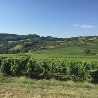 LES VINS GEORGES DUBOEUF and the Pride of Beaujolais Photo