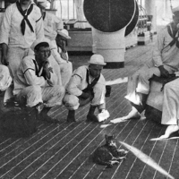 South Street Seaport Museum Hosts Author Peggy Gavan in Discussion of Seafaring Cats Photo