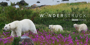BBC AMERICA Expands Nature Micro-Net 'Wonderstruck' to Two Days