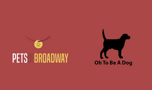 VIDEO: Watch Jeremy Jordan, Shoshana Bean, Karen Olivo & More Share a Happy Moments with Their Dogs!