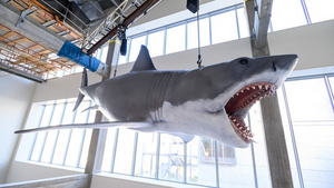 Academy Museum Installs The Only Surviving Shark Model From the 1975 Film JAWS