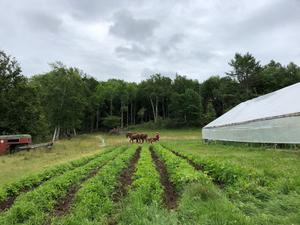Threadbare Theatre Workshop Announces Outdoor Summer Season at Carding Brook Farm