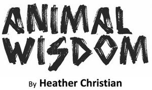 Tickets Now on Sale for ANIMAL WISDOM Original Film Adaptation