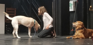 Three-Legged Therapy Dog To Make Stage Debut In ANNIE