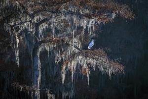 North Texas Asian Photographers To Exhibit At Eisemann Center
