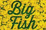 BIG FISH Grosses