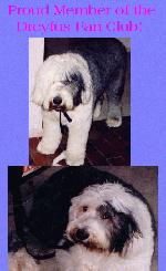 My Baby Boy Dreyfus Who Passed Away At The Age Of 11 On September 14,2004 Of A Heart Attack. God Rest His Soul.