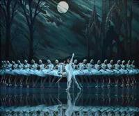 Swan Lake in South Africa
